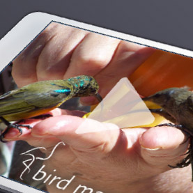 Online Video Channel Bird Matters